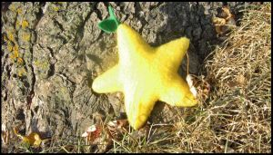 A Star Shape Fruit by roxastuskiomi