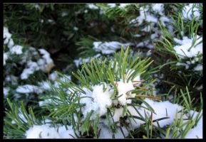 pine snow by wasd