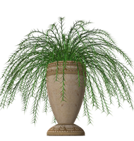 Fern plant stock in pot vase by madetobeunique
