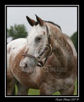 Studly Man by equusimages