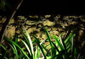 A Dominican Night Project 11 by MichaelGBrown