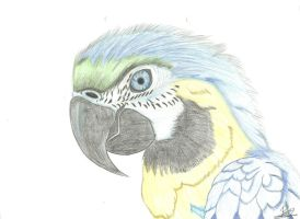 Parrot by manoartist1996