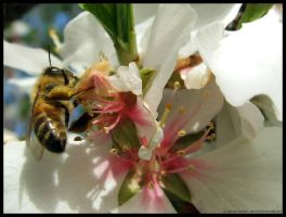 Bee Two. by pukingpastilles