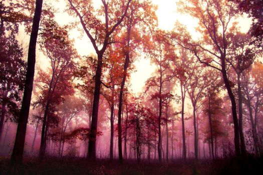 Forest in Fog 1 by 6v4MP1r36