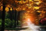 Imagine by ildiko-neer