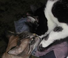 Kitty Kisses by cat-lovers