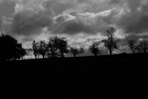 Trees standing alone on a hill by Missy-Babby