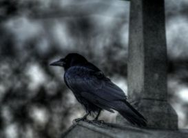 crow by lucifersdream