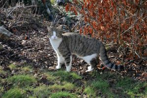 spring cat by 666copperhead666