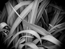 Day Lily BW 2 by lightzone