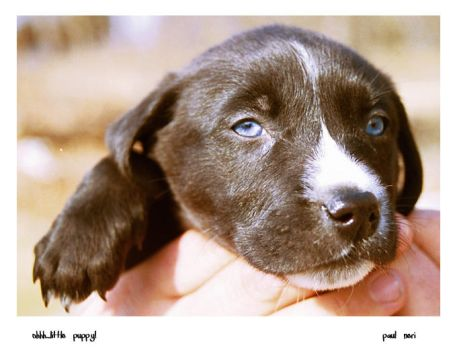blue eyed puppy by quiksilver315