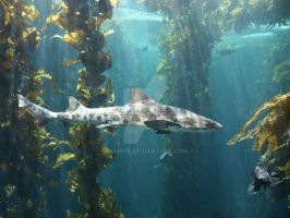 Shark Species ID: Leopard Shark by Namyr