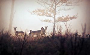 Deer in The Mist by hakukamizaki