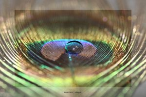 water lens by vinayan