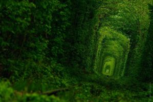 Green Tunnel  1 by AtreJane