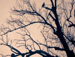 Bird in tree by Emvlo
