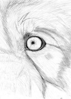 Closeup wolf eye by Puppeteerz