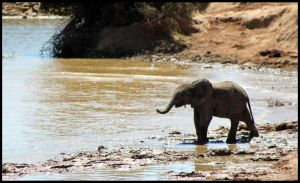 Baby Elephant at the Waterside by mikewilson83