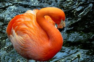 Flamingo by dmguthery