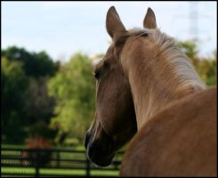 Diesel View by Phantom303