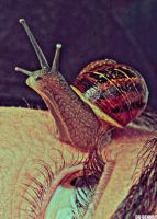 Snail and body 1 by Dr-Benway