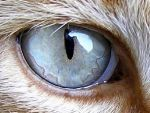 Cat's Eye by SiliaHollow