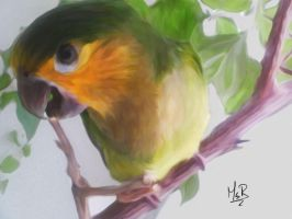 Tony the Parrot Drawing by Ms--R