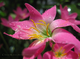 Pure - Sunlight and Rain_06 by CloverKane