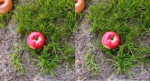 Stereograph - Apple Among Grass by alanbecker