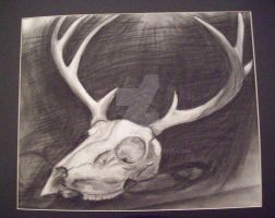 Deer skull by Shadowash1