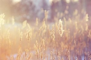Sun by odpium