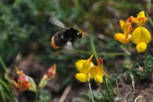 Busy Bee by rayrussell2000uk