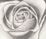 The heart of a rose by sweetmarly