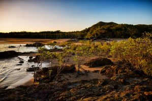 Mangrove Forest by Questavia