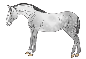 RR Kennels Lusitano Design 4 by DragonicWhispers