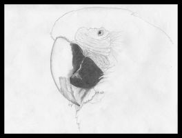 Parrot by Sauroman