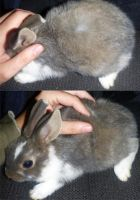 Rabbit experiment by Tricksters-Taxidermy