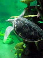 turtle stock 03 by hp-abrasion