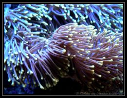 Some plant from the coral reef by TheBobson