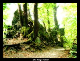 The Magic Forest by MikeleSVK