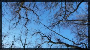 Branches 02 by mmmedo