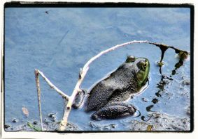 Bullfrog II by mdandree