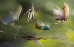 Racing Insects by Edestoid