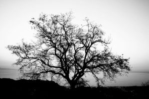 Tree by pirp