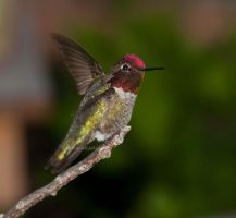 Hummer hello by kayaksailor