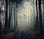 Misty Forest by Justine1985