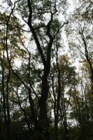 trees in autunm by LeandrasStock