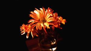 Flowers2-wo Name by cmichelle-art