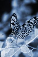 Blue Butterfly by sarahcrack5