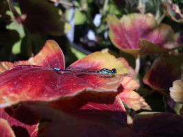 Blue Dragonfly 01 by Treeclimber-Stock
